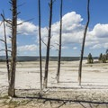 Dead trees in the thermal plain.- Fountain Paint Pots + Lower Geyser Basin