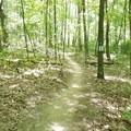 Singletrack through the woods.- Luton Park