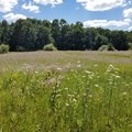 A meadow at the exit in summer splendor.- Luton Park