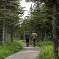 The trail meanders through a spruce forest.- Skyline Trail