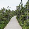Boardwalks make for easy walking.- Skyline Trail