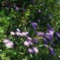 Wildflowers on the Oak Flat Trail portion.- Gunnison Route