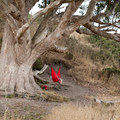 Relaxing near Coast Camp.- Coast Camp