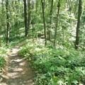 Loose rocks are common on the trail.- Yankee Springs Mountain Bike Loop: Deep Lake Unit