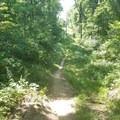 Powerline downhill.- Yankee Springs Mountain Bike Loop: Deep Lake Unit
