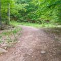 Typical trail.- The Pinnacle