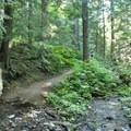 Burnt Lake Trail 772.- Paradise Park Loop