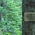 Campfires aren't permitted near Burnt Lake.- Paradise Park Loop