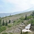 Looking out at Mount Hood and Paradise Park Loop Trail.- Paradise Park Loop