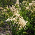 Unidentified species (help us identify it by providing feedback).- Mosca Pass Trail