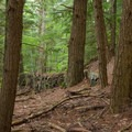 Remains of the old carriage road.- Shelving Rock Mountain