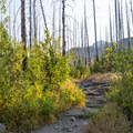 Ascending through fire-scarred forest.- Loop Trail