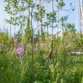 It is amazing to see how the forest regenerates.- Loop Trail