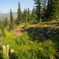 A flower-filled gully near the trail.- Loop Trail