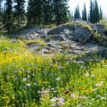 July is the best time for wildflowers.- Loop Trail