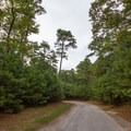 A road connecting different camping loops.- Kiptopeke State Park Campground