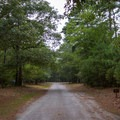Another road connecting different camping loops.- Kiptopeke State Park Campground