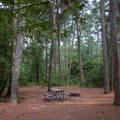 A campsite under the shade of some trees.- Kiptopeke State Park Campground