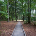 A path through the campground leads to the lavatory.- Kiptopeke State Park Campground