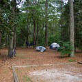 One of the more spacious campsites.- Kiptopeke State Park Campground