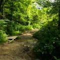 A small bridge across the first creek crossing.- Bradley Falls