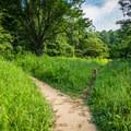 The trail splits in two in the field.- Bradley Falls