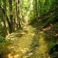 The trail immediately ascends after crossing Bradley Creek.- Bradley Falls