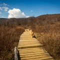 The marshy delicate plantlife of the valley struggles to grow back after massive wildfires sterilized the soil.- Graveyard Fields