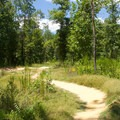 A portion of the Swift Creek mountain bike trail system.- Pocahontas State Park