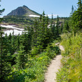 Nearing the pass amid stunted high-elevation forest.- Swiftcurrent Pass Trail