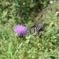 Wildflowers are abundant in the summer.- Wilson's Creek National Battlefield