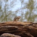 Wildlife along the trail.- Mormon Trail to Hidden Valley