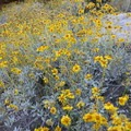 Wildflowers along the Mormon Trail.- Mormon Trail to Hidden Valley