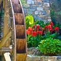 A windmill and rose garden in the town.- Cinque Terre