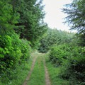 The trail becomes road-like toward the Loon Lake RV Resort.- Loony's Lakeview Trail