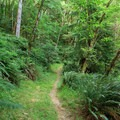 The trail climbs through dense, lush forest.- Loony's Lakeview Trail