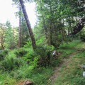 A gap in the thick forest offers views of the adjacent hillside.- Loony's Lakeview Trail