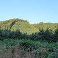 Open views of the mountains to the east where there is evidence of recent clearcutting.- Loony's Lakeview Trail