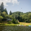 A raptor soars above the Loon Lake Lodge Waterfront House.- Loon Lake