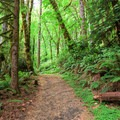 The trail begins in the Loon Lake Recreation Site beach area along a paved path.- Loon Lake Falls
