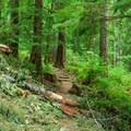 Downed trees across the trail at the time of this publication.- Loon Lake Falls