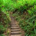 Several narrow stairs take the trail up a short, steep slope.- Loon Lake Falls