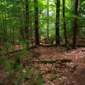 The trail is unmarked but well-worn and easy to follow.- Northwest Bay Brook Falls
