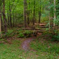 A second trail leads to a lookout above the falls.- Northwest Bay Brook Falls
