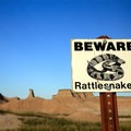 The only venomous snake in the park is the prairie rattlesnake.- The Door Trail