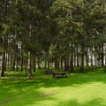 PIcnic area among the tall pines.- Crown Point Campground