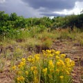 Patch of wildflowers.- Prater Ridge Trail