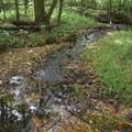 A creek and forest foliage at George Washington Carver National Monument.- George Washington Carver National Monument