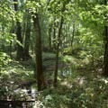 The forest foliage of George Washington Carver National Monument.- George Washington Carver National Monument