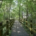 Footbridges amid the forest foliage at George Washington Carver National Monument.- George Washington Carver National Monument